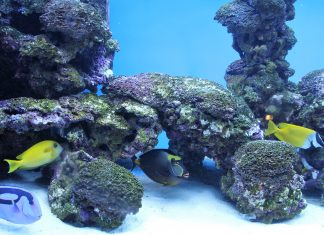 fish and coral on aquarium