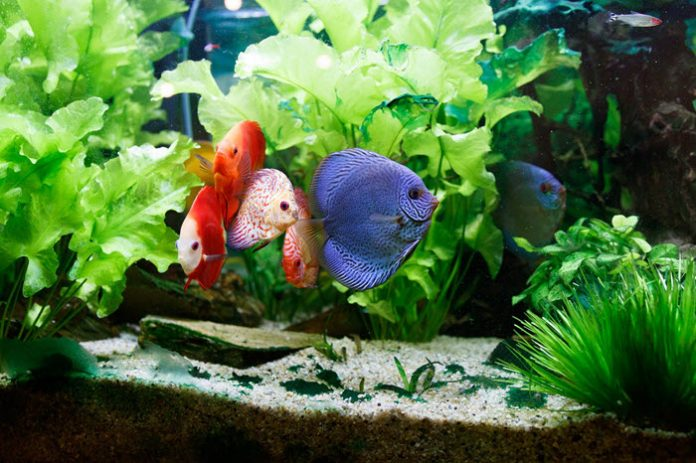 fishes on fish tank